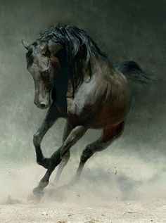 Amazing Photographs of Horses | 20+ pictures | Most Beautiful Pages: