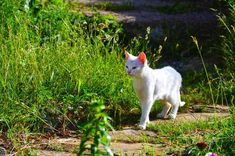 How to #find a #missing #cat is not much difficult, you just need to follow 8 simple steps: 1) Keep yourself #relax and calm, 2) #Search on the immediate basis... https://www.healthypetsystems.com/cats/cat-behavior/how-to-find-a-lost-cat-missing-cat-poster-lost-cat-finder/  #cats #catsofinstagram #pet #pets #animals #animal #kitten #cathealthsimple