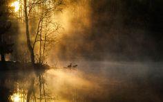 ducks mist
