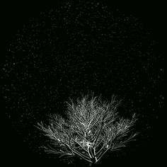 'Re-Génération' Reimagines the Complex Beauty of Nature in 360° | The Creators Project