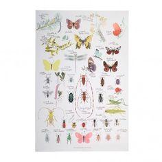 Poster Insectes Tinou le Joly Sénoville