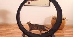 13 creatieve tips om je kat meer te laten bewegen! - The Animal Nanny