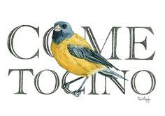 Fran Méndez - diseño e ilustración | Aves de Chile