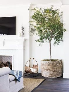 Indoor olive tree in white living room on Thou Swell Kevin Francis OGara Indoor Olive Tree, Indoor Trees, Indoor Plants, Tree Interior, Interior Plants, Interior Design, Design Design, Stone Planters, Diy Planters