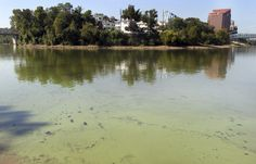 Toxic algae bloom now stretches 650 miles along Ohio river | The Columbus Dispatch
