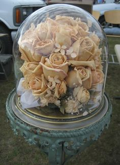 Roses in a cloche. Want