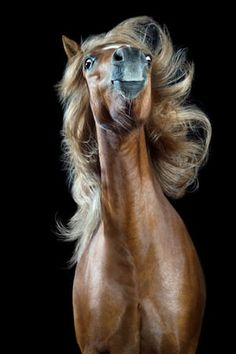 The mane attraction: hair-tossing horses – in pictures #equifirstaidusa #horse #firstaid #horses #efa