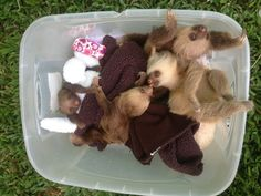 A bucketful of little baby sloths - 25% off this week at SlothMart!  (Please click through to donate to Save Our Sloths/The Sloth Sanctuary. <3)