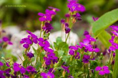 Pázsitviola Home And Garden, Herbs, Flowers, Plants, Yard, France, Patio, Herb, Plant