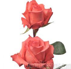 Impulse - Orange Roses
