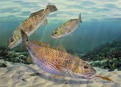 Gold Diggers Fish Wall Art