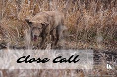 Close Call - Barks And Bytes