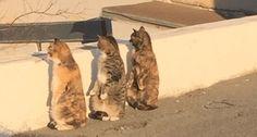 cats turning around