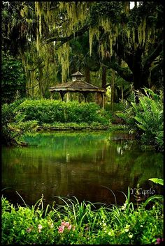 Washington Oaks Gardens State Park. Palm Coast, FL    Shades of Green by yadiyada27.deviantart.com