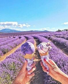 [New] The 10 Best Desserts Today (with Pictures) - Do you know what's better than eating lavender ice cream? Eat lavender ice cream on the lavender farm by: .