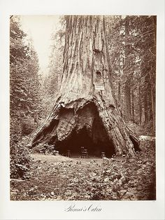 1876 Pioneer's cabin made in the base an old giant tree. Photo by Carleton E. Watkins (American, 1829–1916)