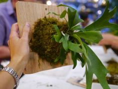 Little Hiccups: Stag Horn Fern Workshop