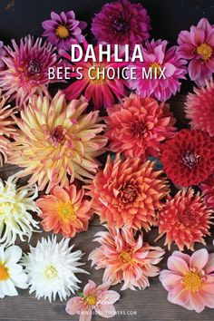 Dahlia Bee's Choice Mix Dahlia spp.  We are thrilled to offer this diverse mix of seeds collected from our dahlia fields. These easy-to-grow seeds will produce a wide range of shapes, sizes and colors - no two plants will be the same! Flowers in this mix will be mostly open-centered types that will attract lots of pollinators. If you discover a variety in the mix that you love, tubers can be saved and planted out the following year.  #floret #growfloret #dahliaseeds Growing Seeds, Types Of Plants, Beekeeping, Cut Flowers, Amazing Gardens, Dahlia, Gardening Tips, Lush, Harvest