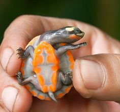 Colorful Baby Turtle