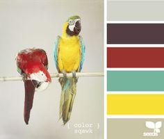 color squawk by design seeds