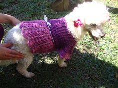 Roupas em crochê para cães