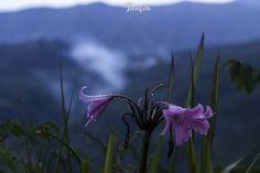 Flower alami