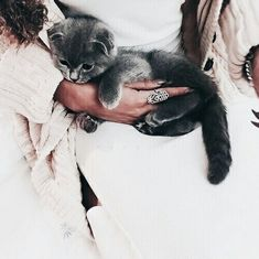 I love cute cats and kittens 'cuz they bring me happiness. Animals And Pets, Baby Animals, Funny Animals, Cute Animals, Funniest Animals, Funny Cats, Cute Kittens, Cats And Kittens, Beautiful Cats