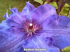 Världens Blommor FINNS ÄVEN PÅ: PINTEREST FACEBOOK TWITTER INSTAGRAM GOOGLE PLUS GOOGLE MAPS YOUTUBE