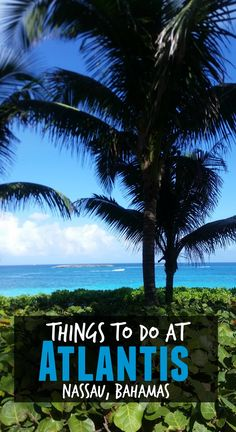 Things to do at Atlantis - Nassau Bahamas