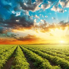 THE KEYS TO MORE SUSTAINABLE FARMING || Image Source: https://3sr05l2l7ihe1u4u613nqp53-wpengine.netdna-ssl.com/wp-content/uploads/2017/12/sustainable-farming-2.jpg