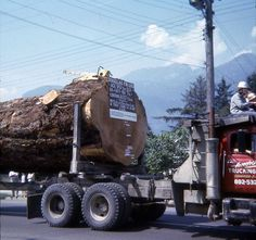 Eric Andersen‎Old Logging Pictures .......... 951 year old Douglas-fir on Les Armstrong's truck in the 1966 Squamish Loggers Sports Day Parade. The Upper Squamish Valley tree was estimated to be 269 feet tall.https://www.facebook.com/photo.php?fbid=10204451975767797