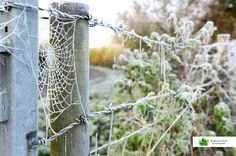 Spiders web frost Gloucestershire UK Spiders, Frost, Glass Vase, Photographs, Home Decor, Homemade Home Decor, Spider, Photos, Photograph