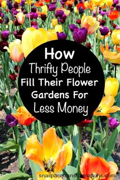 Fill your flower gardens for less money than you might think possible with the great tips in this post.