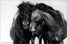 While horses in captivity are what we see and read about most, it's the wild horses  we don't hear about very often. On a place called...
