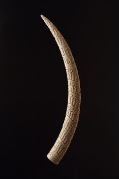 A Fine African Loango Coast, Angola Ivory Tusk  Carved in relief in great detail with scenes of daily commercial life along the coast in a continuous spiral band, including a rare scene of Christ on the Cross  Circa 1850 - 60   Sizes: 78cm long