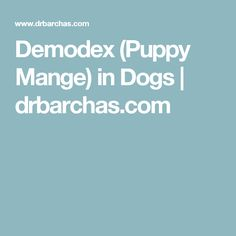 Demodex (Puppy Mange) in Dogs | drbarchas.com