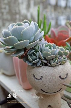 I love cacti and succulents in face containers