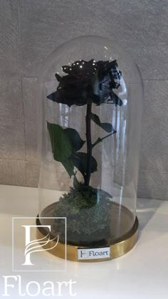 Fireworks Pictures, Black Rose Flower, Things I Need To Buy, Forever Rose, Black Luxury, The Bell Jar, Gothic Wedding, How To Preserve Flowers, Color Negra
