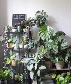 Coffee ✔️, early start of the day ✔️ & plants ✔️🌿! Room With Plants, House Plants Decor, Plant Decor, Indoor Garden, Garden Plants, Indoor Plants, Plant Aesthetic, Decoration Plante, Plants Are Friends