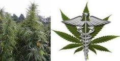 Medicinal Benefits and Treatments From Marijuana