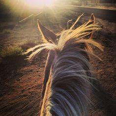 Tumblr Horse Ears, Tumblr, Horses, Animals, Places, Animales, Animaux, Animal, Animais