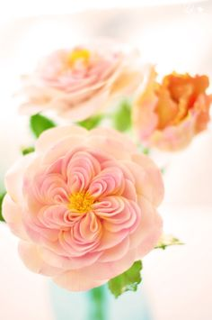 DK Designs - pink heirloom roses and peach/pink parrot tulip