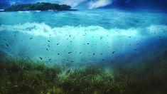 Sea underwater world Wallpapers Pictures Photos Images Underwater Wallpaper, Underwater Background, Underwater Pictures, Underwater Fish, 1366x768 Wallpaper, 1920x1200 Wallpaper, Hd Wallpaper, Trendy Wallpaper, Computer Wallpaper