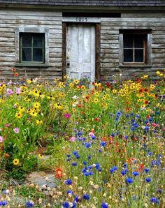 Serenity in the Garden: 10 Great Garden Photos of 2014 - Serenity in the Garden