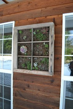 Vertical-Hanging Succulent Garden...I have old windows...this will happen one day!