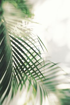 Fronds | Bali • Lensbaby Edge 80 Optic Explored 4/9/15 by Jodie Dobson
