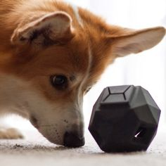The Odin // Modular dog toy puzzle