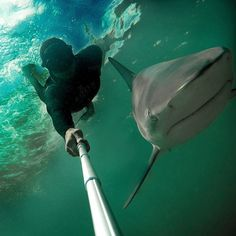 It's Tuesday...time for a #sharkselfie! Freediver Christian Redl took this shot on the Bahamas..lucky guy! #spgadgets #povpole #freediving #apnoe #sharkweek #TagsForLikes #FF #phones