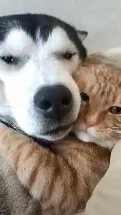 Animals beautiful, cute funny animals, funny animal pictures, funny d Cute Funny Animals, Cute Baby Animals, Funny Dogs, Animals And Pets, Cute Cats, Cute Animal Videos, Funny Animal Pictures, Pet Dogs, Dog Cat