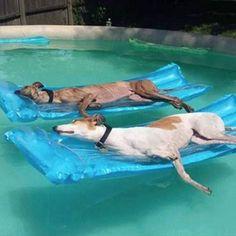 Greyhound life